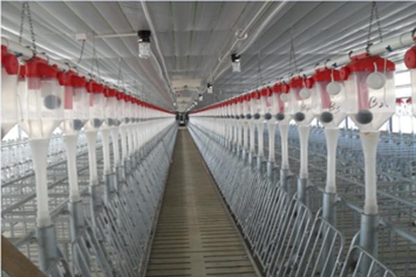 增鑫牧业 猪用自动料线料线配件 养殖用自动供料系统喂料线 自动化上料设备