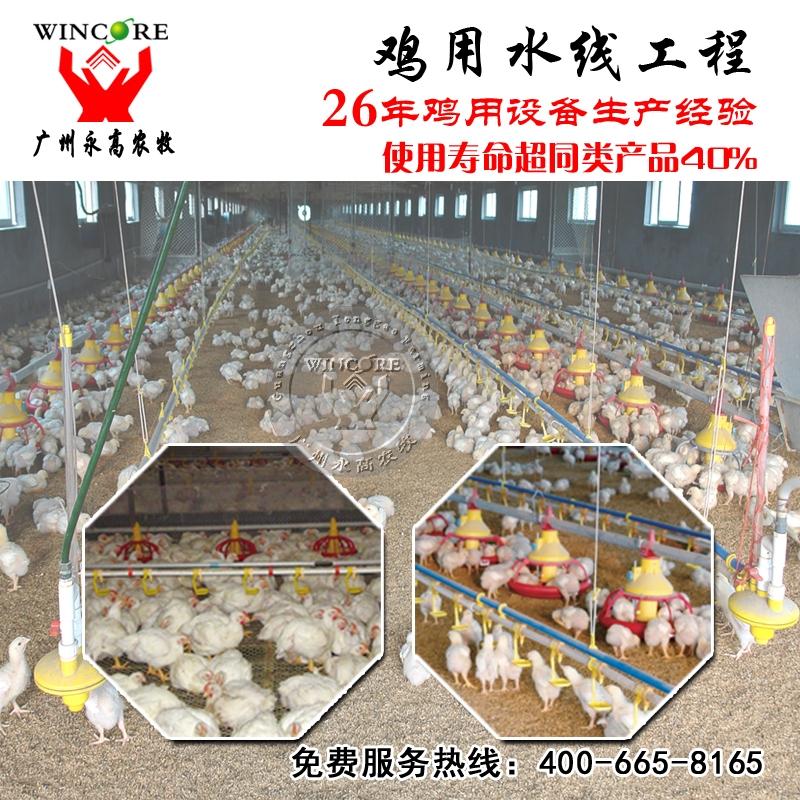 鸡自动饮水系统 自动化养鸡鸭设备 鸡鸭用饮水器 全自动养鸡设备