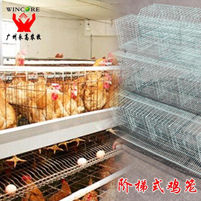 阶梯式蛋鸡笼 蛋鸡笼 蛋鸡自动化养殖设备 大型养殖鸡笼子