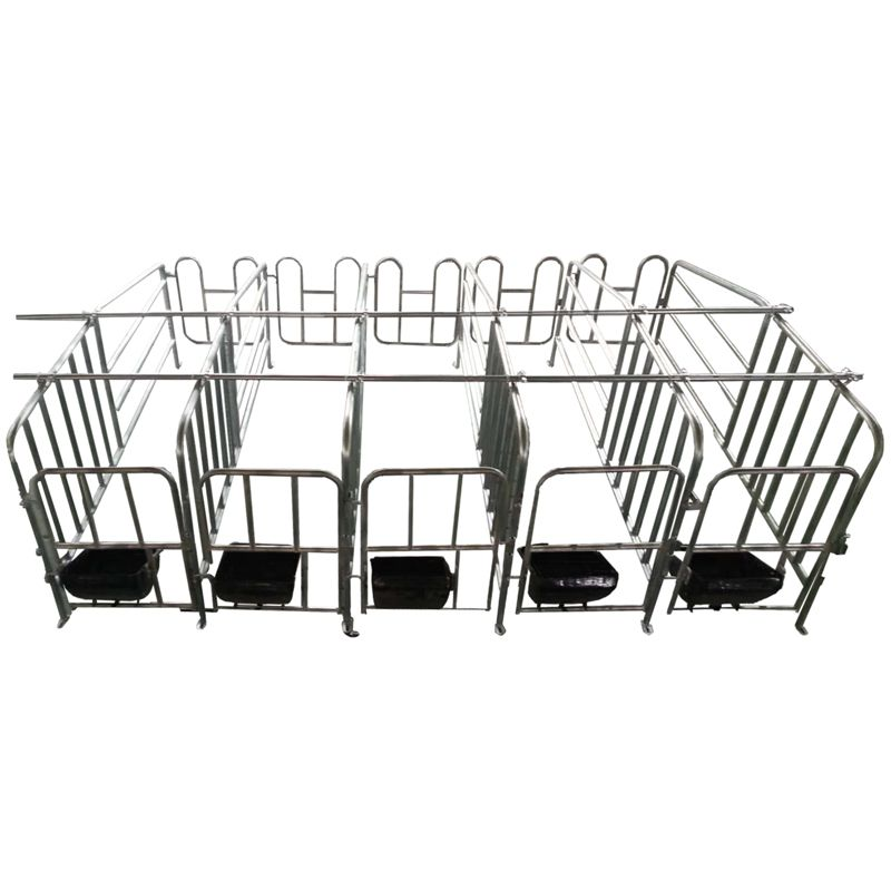 【现代畜牧】母猪定位栏,每组10头猪。