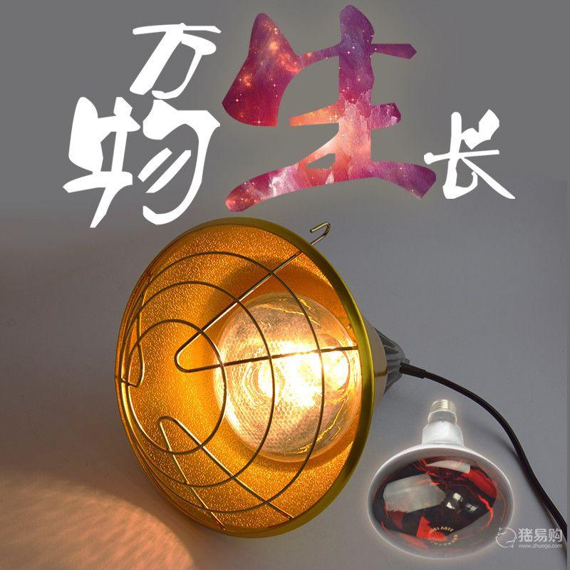 【猪乐道】烤红保温灯泡+金色高级保温灯罩
