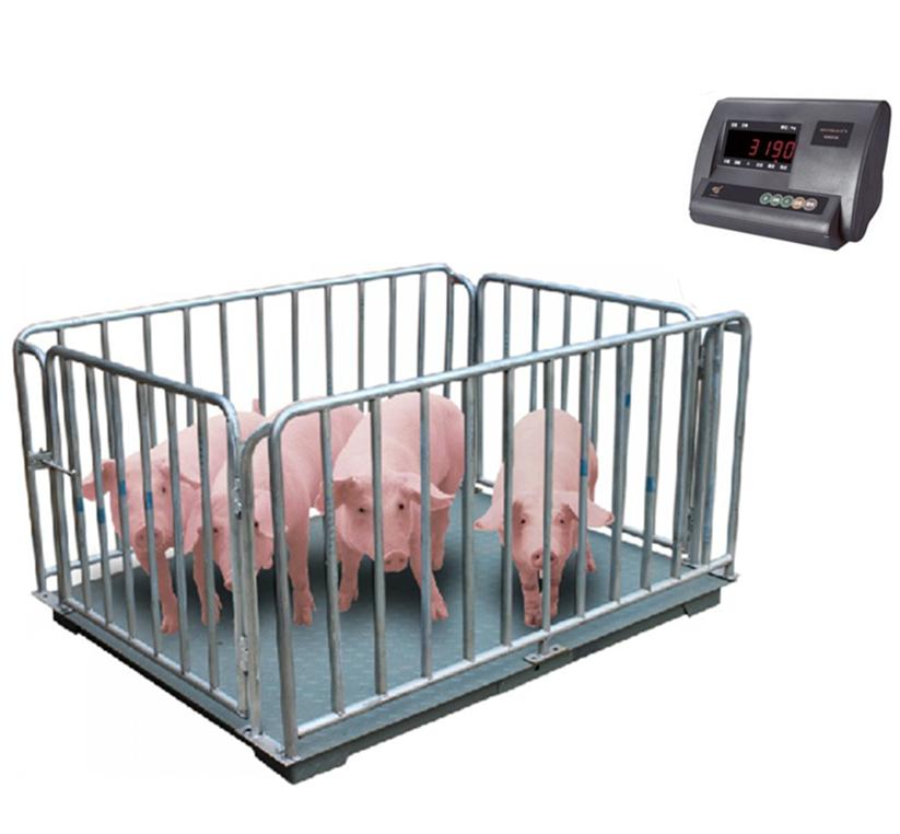 小磅 猪栏秤 称重 2t  1.2*1.5