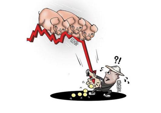 2017年12月7日山东猪价行情
