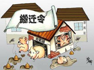 """禁养政策""""搅翻了""""生猪行业"""