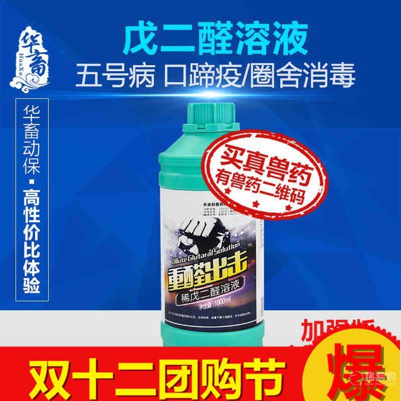 【华畜】5%戊二醛 羊圈鸡舍消毒液 养殖场猪场鸡场兽药消毒水