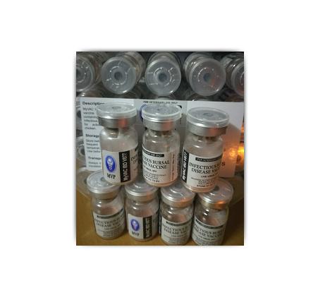 【美国福道】进口法氏囊活疫苗-主要用于法氏囊病预防