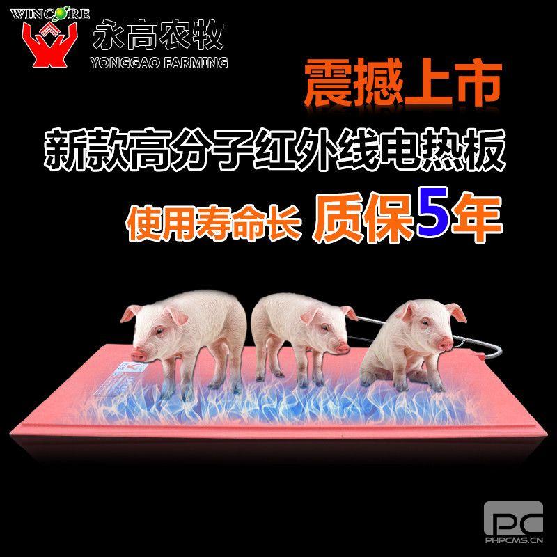 永高仔猪电热板玻璃钢高分子猪用电热板宠物电热板猪用
